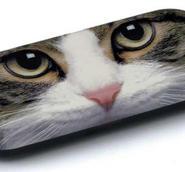 Glasögonfodral Tabbykatt